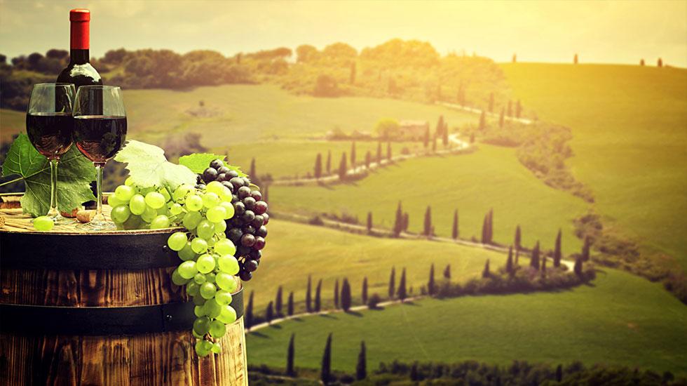 Cánh đồng nho Tuscany - Tour ẩm thực Ý (2)