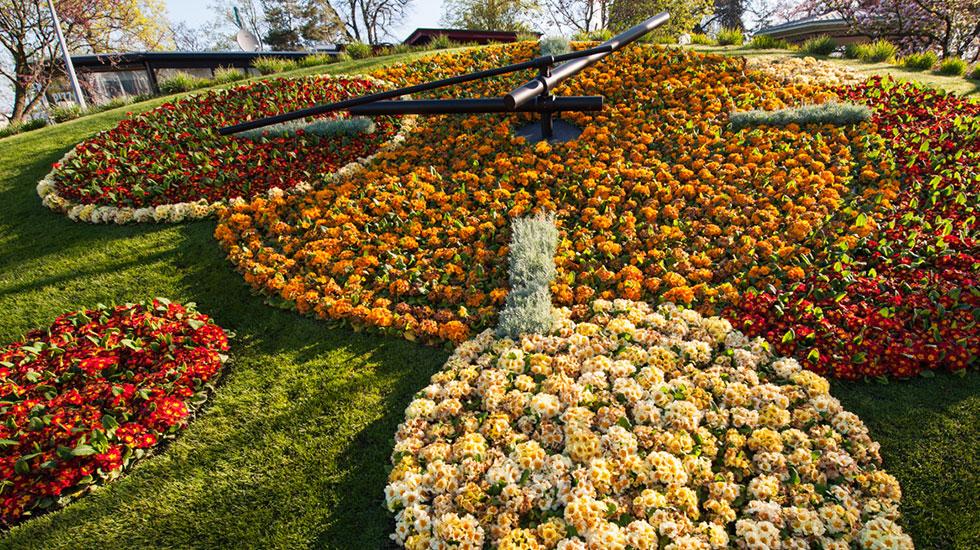 Đồng hồ kết bằng hoa - Tham quan Thụy Sĩ