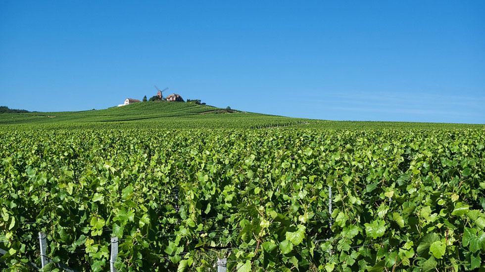 Reims- Tour-Du-Lich-Phap